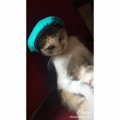 It seems like the cat didn't like the hat