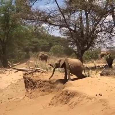 🔥 Baby elephant being taught by mother elephant on how to cross river bank