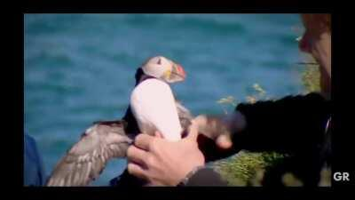 Gordon gets attackt by a puffin