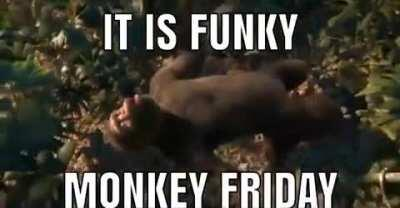 Today is Funky Monkey Friday