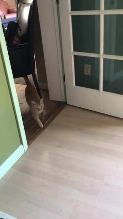 How to find a hiding cat: the call of the brush