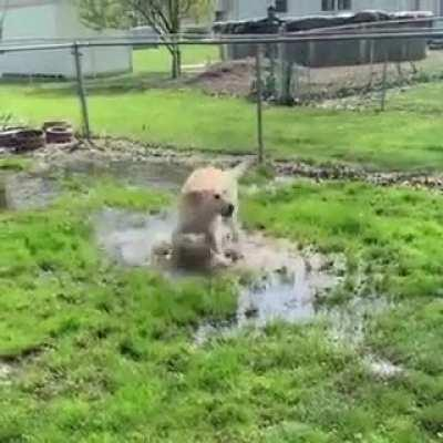 instant lunatic- just add water.