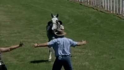 Trying to stop a running horse with your body.