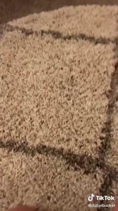 The bug rug