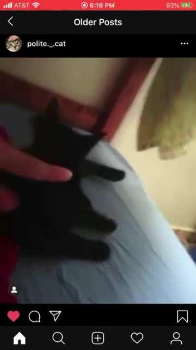 The cat bit him! (I do not own this video)