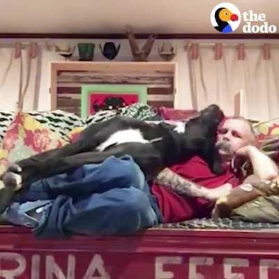 Big pup desperate to cuddle with his dad on the couch