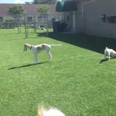 Blind dog trying his best to make new friends