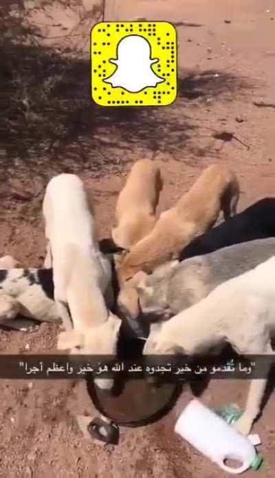 A guy feeding thirsty stray dogs in the Saudi Arabian desert. It gets to 50 Celsius sometimes at this time of the year. Be kind to animals
