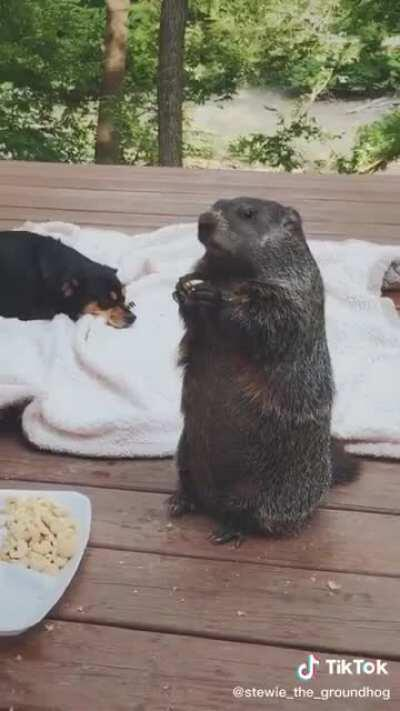 Just animals eating dinner