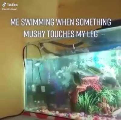 WCGW by keeping your aquarium without a lid.