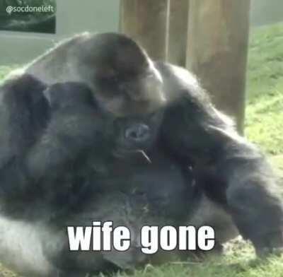 Monkey sad...