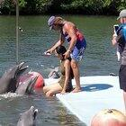 Swim with the dolphins they said. It'll be fun they said. Nobody said anything about getting raped by a dolphin.
