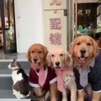 It's hard to take a family photo