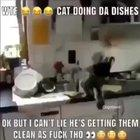 Omg!😂 can this Cat b my wife!??🤭😳