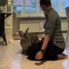 A Flemish giant rabbit.