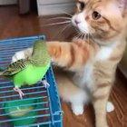 Just petting