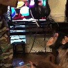 Monkey having fun with a VR headset on