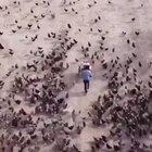 This dude makes art with birds