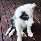 Oh HI! 🐶 my names Finn 👋