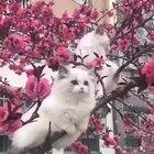 Kittens in a blossom tree