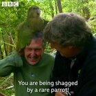 Throwback to the time Stephen Fry encountered a kakapo