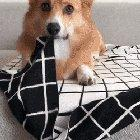 Corgito! I'll Take 10!!!