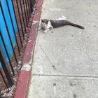 Cat wins a new life.