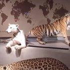 Cool lion exhibit