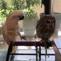 Birdie :