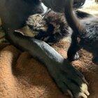 Foster dad Mack loves his babies