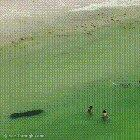 Friendly manatee scaring people at the beach
