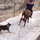 Ain't that cats first rodeo
