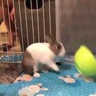 Bunny mad