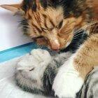 Momma calico cuddling her baby kitten 💗